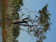 AfricanEagle