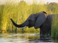 Elephants 1 copy