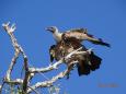 Birdtype