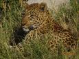 LeopardEYES