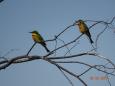 Birdstwins