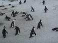 Penguinsmommy