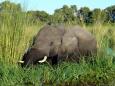 ElephantCanana2