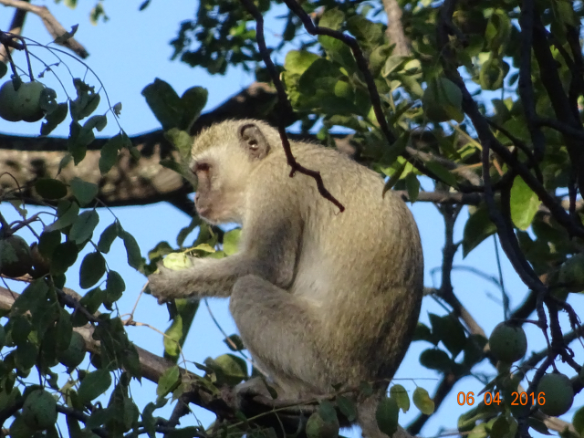 MonkeyEats
